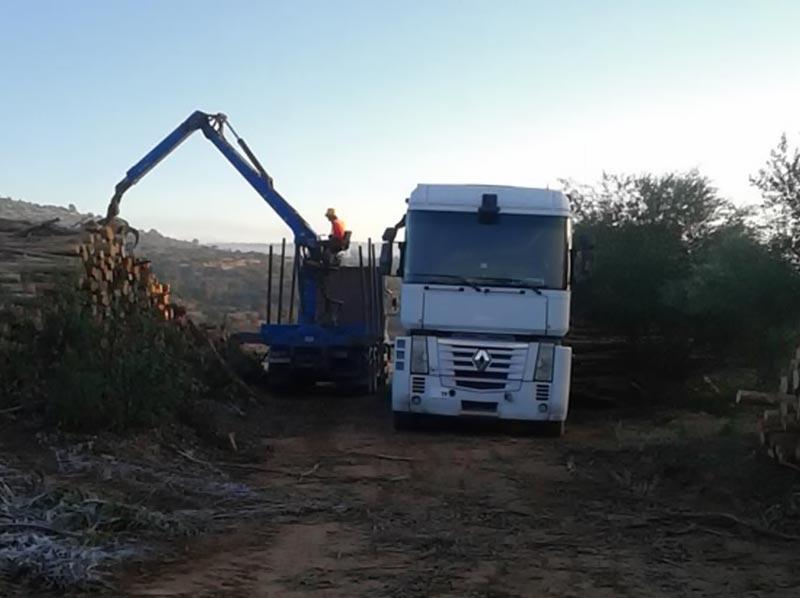 7 Metades Transportes - Serviço Florestal