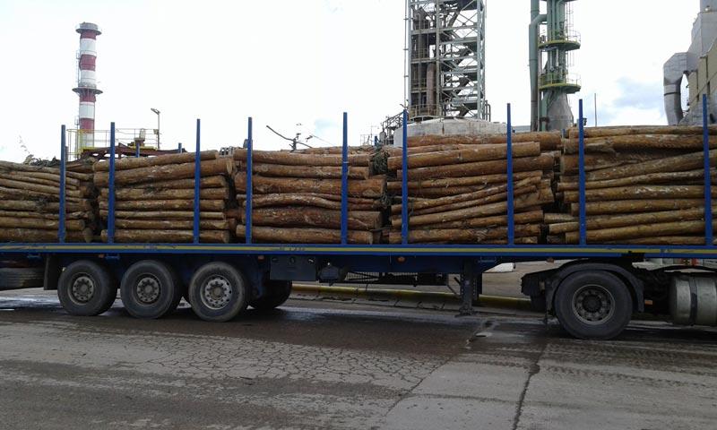 7 Metades Transportes Serviço Florestal